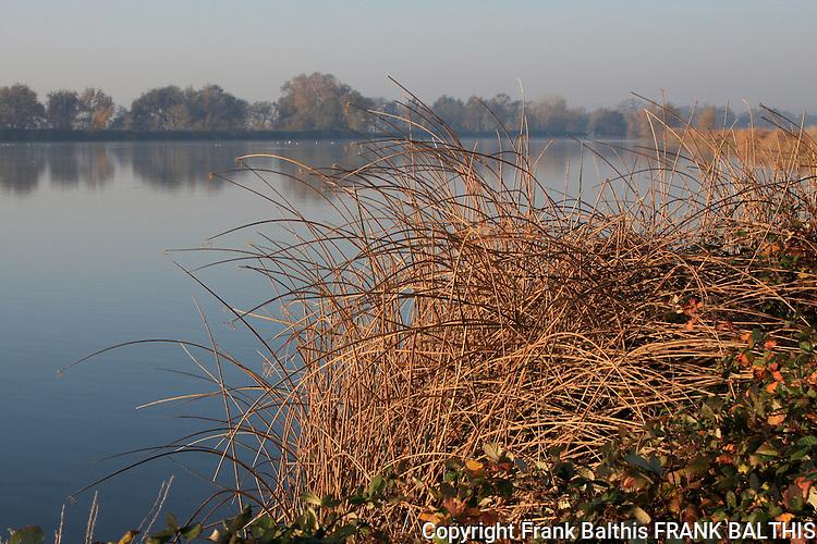 wetland near Road 25 in Woodland