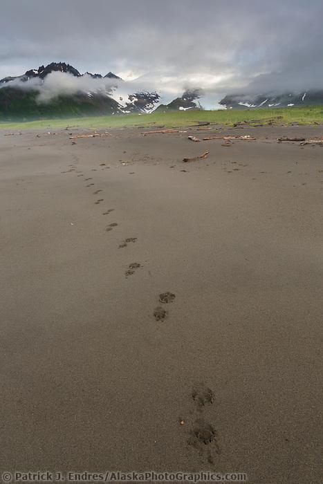 Wolf tracks on the sandy beach of coastal Katmai National Park, Alaska Peninsula, southwest Alaska. Aleutian mountain range in the distance.