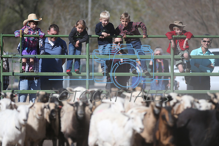 A group of preschool students watch a herding demonstration during the annual Farm Days event at Fuji Park in Carson City, Nev., on Thursday, April 17, 2014.<br /> Photo by Cathleen Allison
