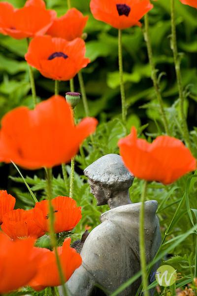 orange poppy and Saint Francis figurine..