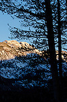 Evening light on mountain, with silhouetted pine tree, Inyo National Forest, California