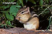 MA02-032z  Eastern chipmunk - Tamias striatus
