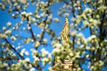 MC 4.18.17 Spring Scenic 01.JPG by Matt Cashore/University of Notre Dame