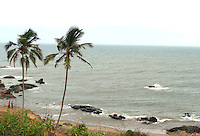 Two Palm trees at Anjuna beach,Goa.