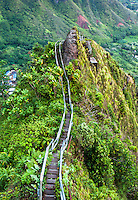 "Steps along a ridge of the Ko'olau mountains on the Haiku Stairs (""Stairway to Heaven"") hiking trail in Kaneohe, O'ahu"