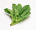 File photo of Japanese spinach. The Japanese government has halted the sale and distribution of spinach and other vegetables, as well as milk and dairy products, from Fukushima, Ibaragi, Miyagi and other prefectures directly affected by radiation leaked from the Fukushima Daiichi nuclear power plant in the aftermath of the 2011 Tohoku-Kanto Natural Disaster. (Photo by AFLO)