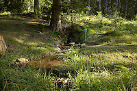FOREST_LOCATION_90126