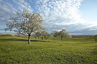 OR_LOCATION_45134