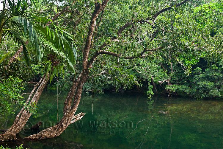Noah Creek.  Daintree National Park, Queensland, Australia
