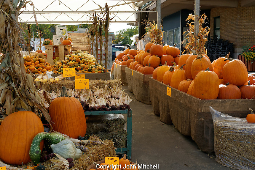 Pumpkins and squash for sale at the Jean Talon Market, Montreal Quebec, Canada