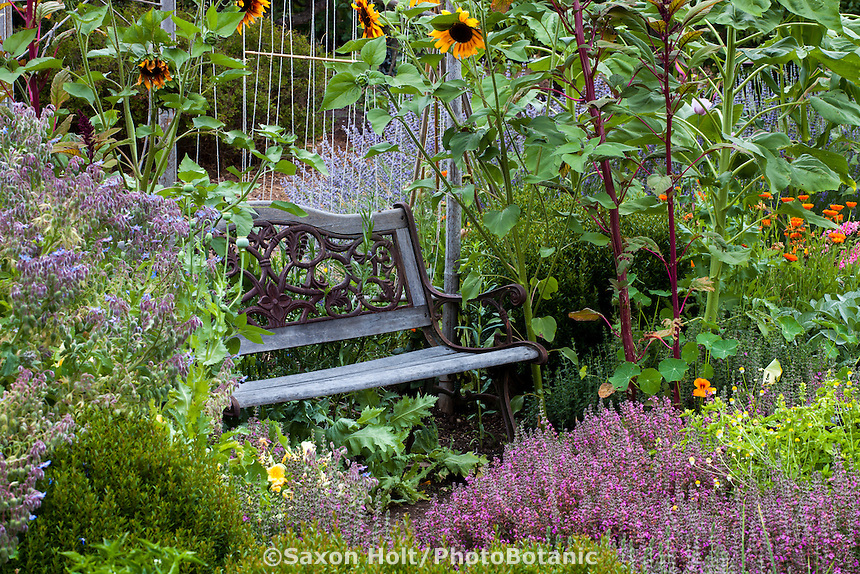 Rustic old wooden bench tucked into edible garden with flowers, herbs, and vegetables.