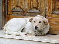 Italien, Latium, Hund vor Haustuer im Bergdorf Rocca Sinibalda | Italy, Lazio, dog lying at front door at mountain village Rocca Sinibalda