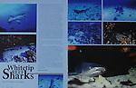 Editorial publications of Maui Hawaii photographer ,Benja Iglesis.
