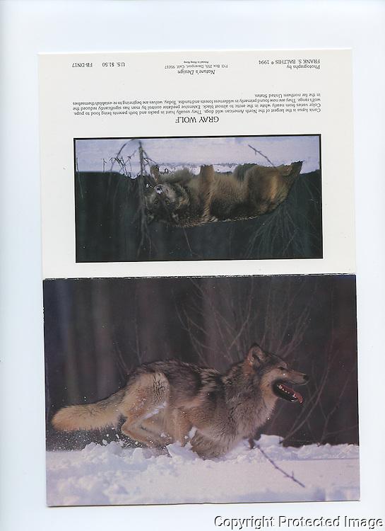 FB-DN17  Gray Wolf  5x7 Notecard