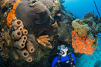 TR1426-D. scuba diver (model released) admires coral and sponge growth on a shallow reef. Cayman Islands, Caribbean Sea.<br /> Photo Copyright &copy; Brandon Cole. All rights reserved worldwide.  www.brandoncole.com