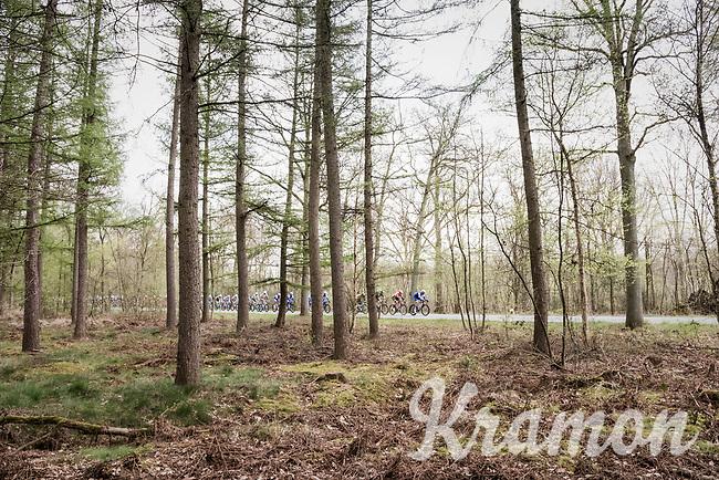 forest passage<br /> <br /> 105th Scheldeprijs 2017 (1.HC)<br /> 1 Day Race: Mol &rsaquo; Schoten (BEL/202km)
