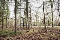 forest passage<br /> <br /> 105th Scheldeprijs 2017 (1.HC)<br /> 1 Day Race: Mol › Schoten (BEL/202km)