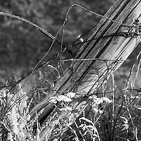Leaning Farm Fence Post Amongst Weeds in Evening Sun