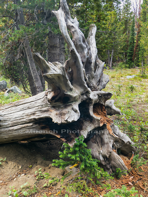 Interior of the Tobacco Root Mountains, Montana