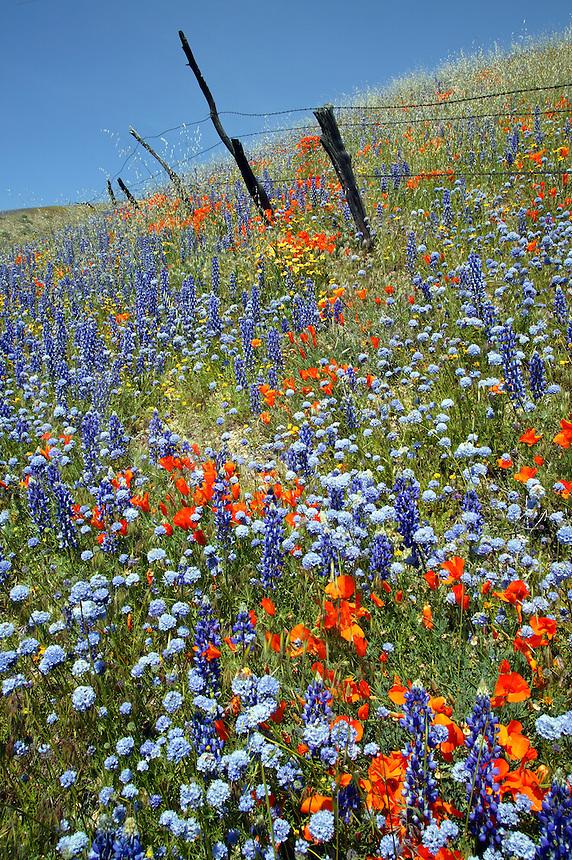Fence and Wildflowers near Gorman, California