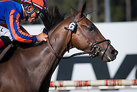 May 28, 2012. Belle Royale and Joel Rosario win the Gamely Stakes(GI) at Betfair Hollywood Park, Inglewood, Ca.