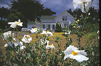 Poppies with Joshua Grindle Inn in the Background, Mendocino, California