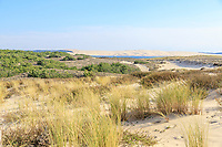 France, Gironde, Cote d'Argent, Parc naturel marin du bassin d'Arcachon (Arcachon Bay Marine Natural Park), Lege Cap Ferret, dunes vegetation and the Dune du Pilat in background // France, Gironde (33), Côte d'Argent, Parc naturel marin du bassin d'Arcachon, Lège-Cap-Ferret, végétation des dunes du Cap-Ferret et dune du Pilat en arrière-plan