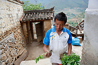 Wumu Village, Yulong County, Yunnan Province, China - Dongba priest He Jixian of the Naxi ethnic group checks the vegetables grown in his field, June 2019.