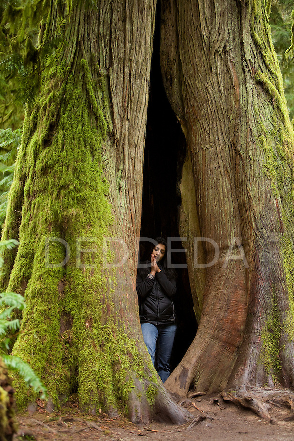 A young woman meditates inside a massive oldgrowth Douglas fir tree in Cathedral Grove, in MacMillan Provincial Park on Vancouver Island, British Columbia, Canada.