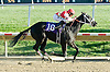 La Vengansa winning at Delaware Park on 11/1/10