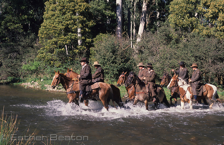 Stockmen leading horses through shallow stream. Snowy Mountains, Victoria