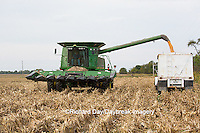63801-07009 Farmer harvesting corn, Marion Co., IL