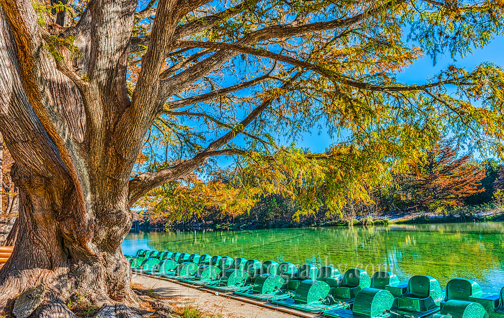 The paddle boats sit under this  old cypress with its fall foliage with all it twist and knots in Garner State Park it a lovely site. I image it has been shadding these paddle boats for many years now as  the emerald green waters of the Frio River past by.