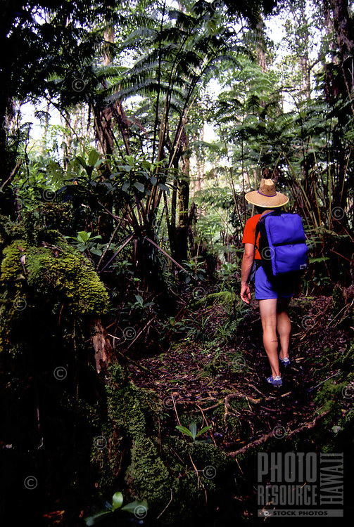 A man wearing a hat and backpack heads up the trail at the Wao Kele Puna  rainforest on  the Big Island of Hawaii.