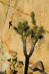 Rock climber climbing at Hidden Valley, Joshua Tree National Park, California