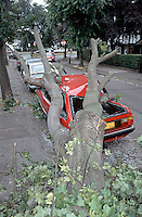 Car crushed by a falling tree. The vehicle was completely destroyed..©shoutpictures.com..john@shoutpictures.com