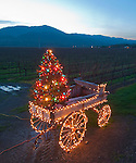 Wagon holds Christmas tree in Napa Valley vineyard.