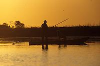 Europe/France/Pays de la Loire/44/Loire-Atlantique/Grande Brière et Marais de Donges et du Brivet : Pose des appeaux pour la chasse du lendemain matin dans la lumière du soir
