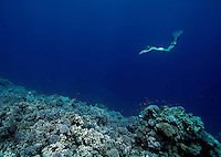 Elisabeth Kristoffersen freediving in Blue Hole near Dahab,Sinai in Egypt. © Fredrik Naumann/Felix Features