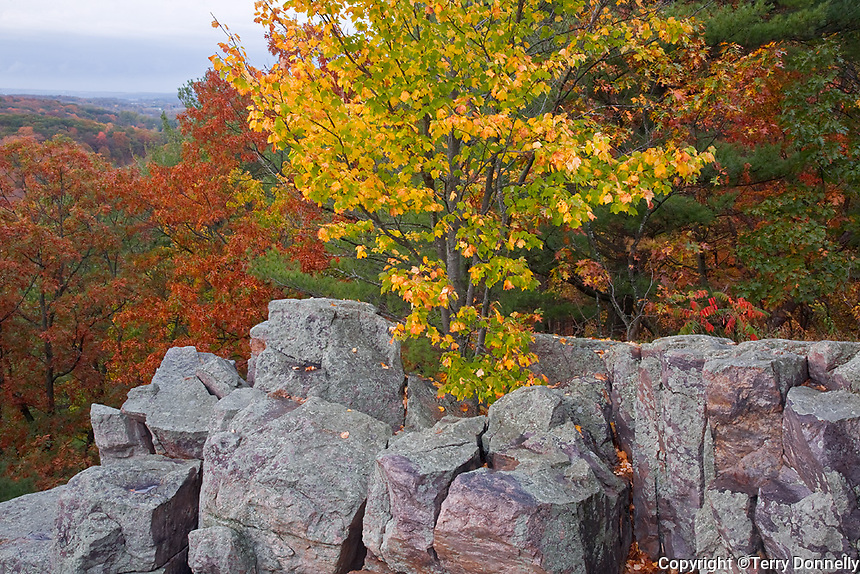 Devil's Lake State Park, WI<br /> Quartzite rocks on the East Bluff cliff face with fall colored forest canopy above Devil's Lake