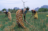 INDIA, Tamil Nadu, Kanyakumari, Cape Comorin, Muppandal, windfarm with wind turbine, women weed in onion field / INDIEN Kanniyakumari, Kap Komorin, Windpark mit Windkraftanlagen, Frauen hacken Zwiebelfeld