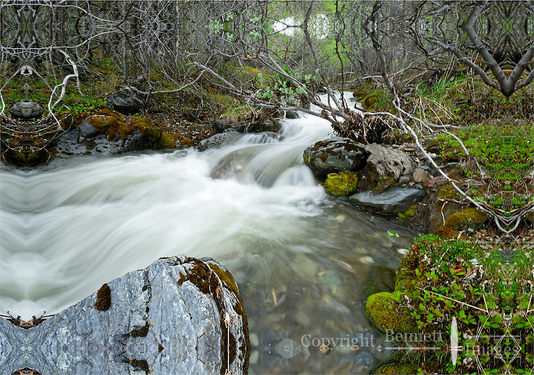 A hidden creek flows under bushes in a small ravine along the Kongakut River, in Alaska's Arctic National Wildlife Refuge.