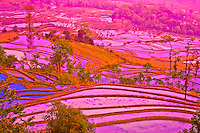 Yuan Yang rice terraces .Peoples Republic of China.Yunnan Province.Near Vietnamese border.UNESCO Wold Heritage Site