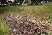 Composting in place, hugelkultur, sheet composting along garden path