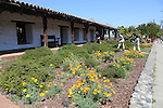 Visitors and CA poppies at Mission Sonoma