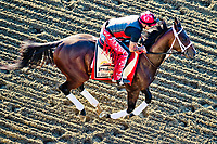 BALTIMORE, MD - MAY 17:  Classic Empire exercises in preparation for the Preakness Stakes this Saturday at Pimlico Race Course on May 17, 2017 in Baltimore, Maryland.(Photo by Scott Serio/Eclipse Sportswire/Getty Images)