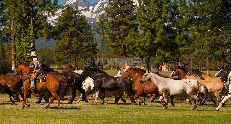 Galloping Horses at R&B Ranch near Sisters, Oregon
