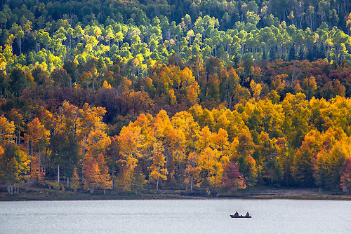 Fall colors from Aspen trees at  Kolob Reservoir near Zion National Park, Utah