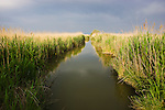 """Canal with reed grass at lagoon """"Etang du Vaccares"""", Camargue, France"""