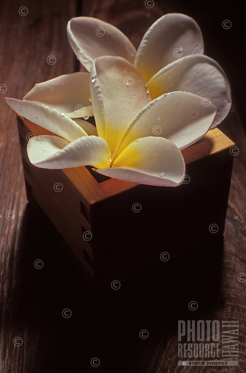 Plumeria leis with water drops in a square container